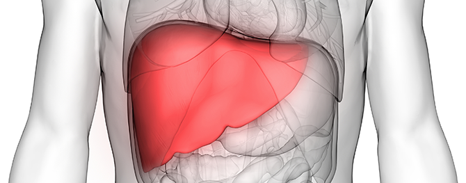 A Healthy Liver Is A Healthy Life